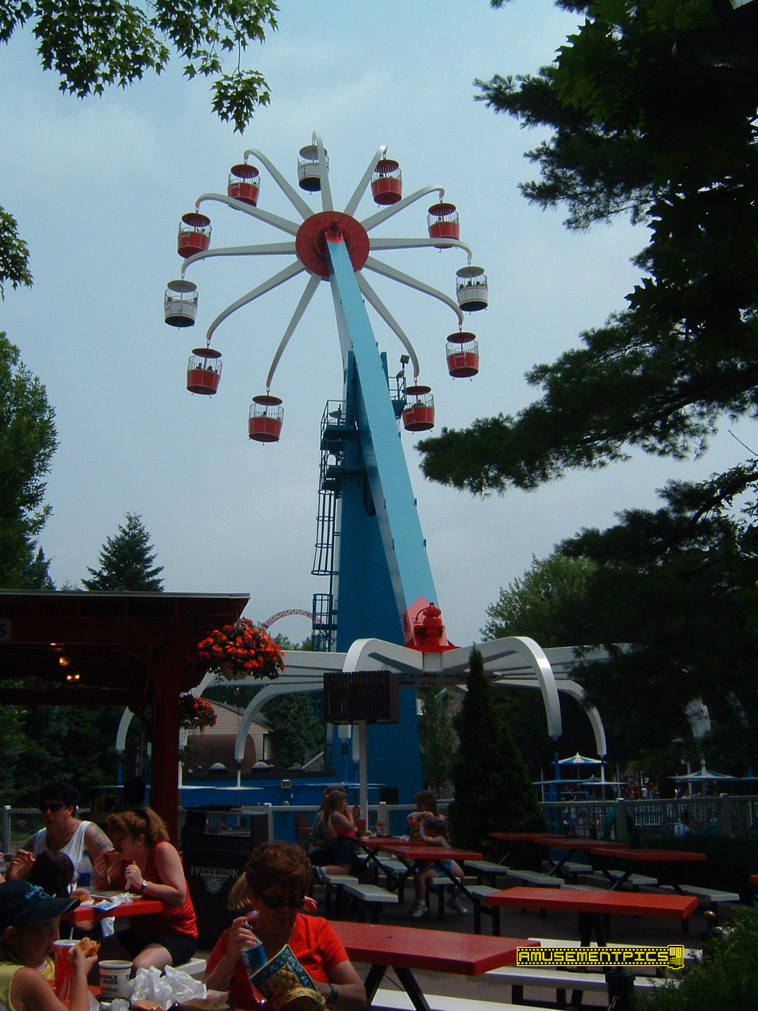flying falcon hershey park - HD 1536×2048